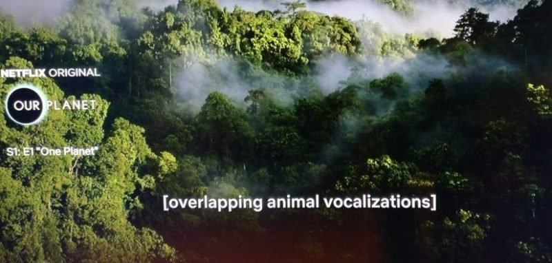 Screenshot of 'One Planet' on Netflix of the rainforst with the captions [overlapping animal vocalization] at the bottom